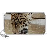 jaguar cat.jpg