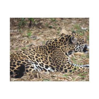 jaguar cat snarling side view feline gallery wrapped canvas