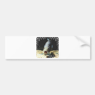 Jaguar Cichlid Bumper Sticker