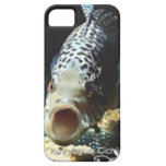 Jaguar Cichlid iPhone 5 Cover
