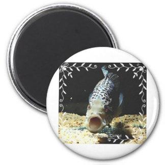 Jaguar Cichlid Magnet
