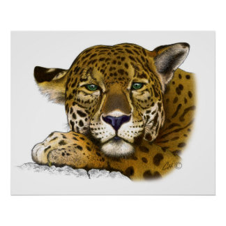 Jaguar colored poster