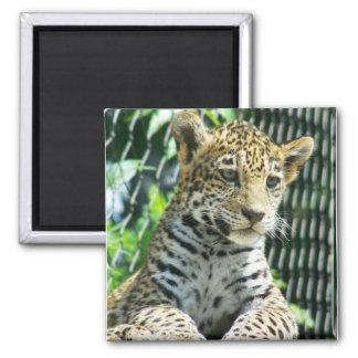 Jaguar Cub Imán Cuadrado