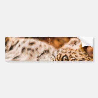 Jaguar Cub Lying in Foliage Car Bumper Sticker
