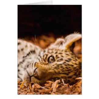 Jaguar Cub Lying in Foliage Card