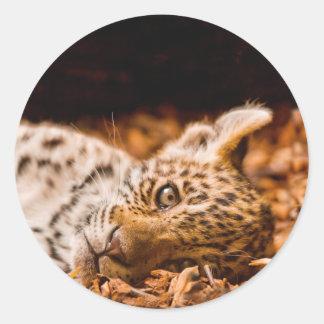 Jaguar Cub Lying in Foliage Classic Round Sticker