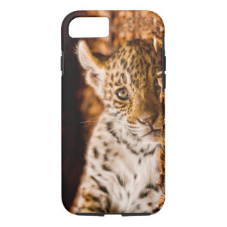 Jaguar Cub Lying in Foliage iPhone 7 Case