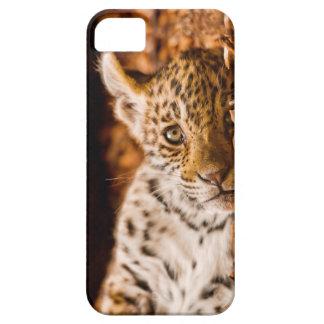 Jaguar Cub Lying in Foliage iPhone SE/5/5s Case