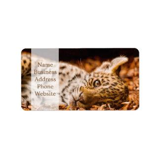 Jaguar Cub Lying in Foliage Label