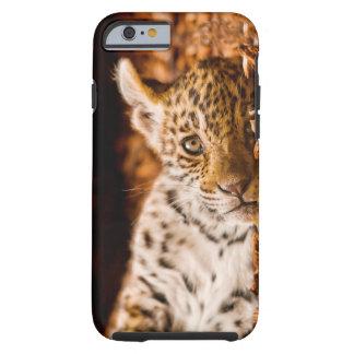 Jaguar Cub Lying in Foliage Tough iPhone 6 Case