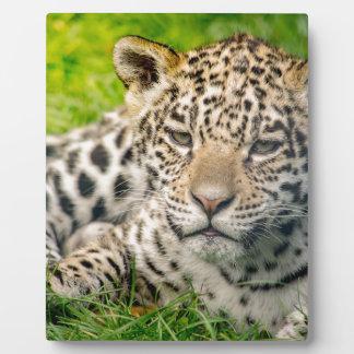 Jaguar cub plaque
