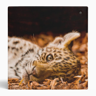 "Jaguar Cub que miente en follaje Carpeta 1 1/2"""