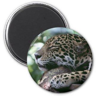 Jaguar el dormir con el fondo frondoso imán redondo 5 cm
