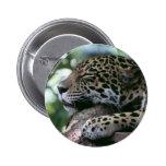 Jaguar el dormir con el fondo frondoso pin