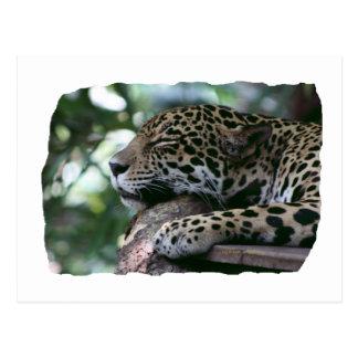 Jaguar el dormir con el fondo frondoso postales