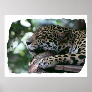 Jaguar el dormir con el fondo frondoso póster