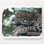 Jaguar el dormir con el fondo frondoso tapetes de ratones