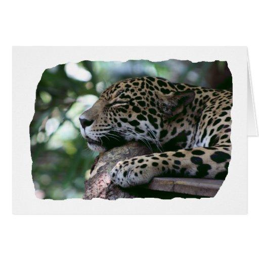 Jaguar el dormir con el fondo frondoso tarjeta pequeña