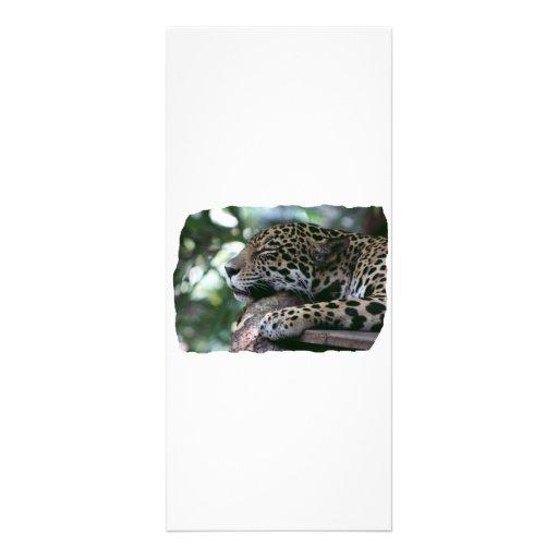 Jaguar el dormir con el fondo frondoso lonas publicitarias