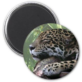 Jaguar el dormir la Florida, parte posterior verde Imán Redondo 5 Cm