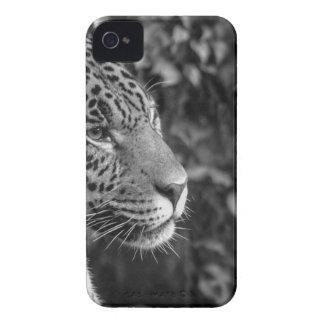 Jaguar en blanco y negro iPhone 4 Case-Mate funda