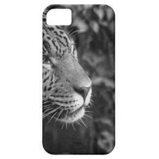 Jaguar en blanco y negro iPhone 5 fundas