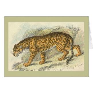 Jaguar, Felis onca Greeting Card