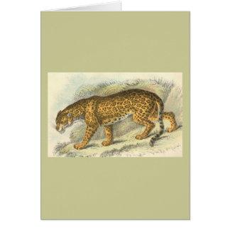 Jaguar, Felis onca Card