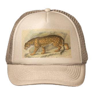Jaguar, Felis onca Hats