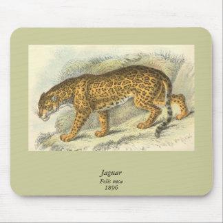 Jaguar, Felis onca Mouse Pad