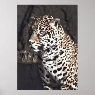 Jaguar femenino posters