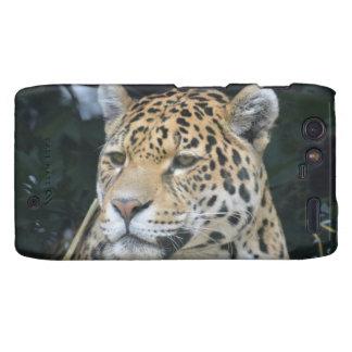 Jaguar Glare Droid RAZR Cases