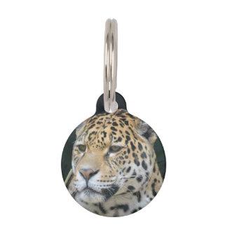 Jaguar Glare Pet ID Tags