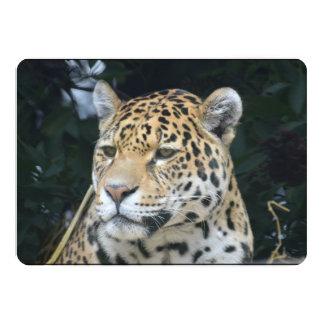 Jaguar Glare Personalized Announcement
