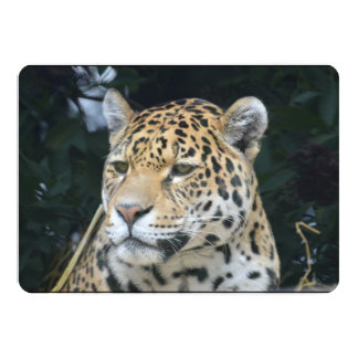 Jaguar Glare Invitations