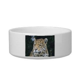 Jaguar Glare Pet Bowl