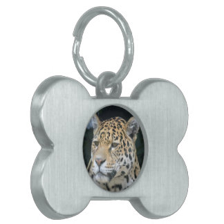 Jaguar Glare Pet Tags