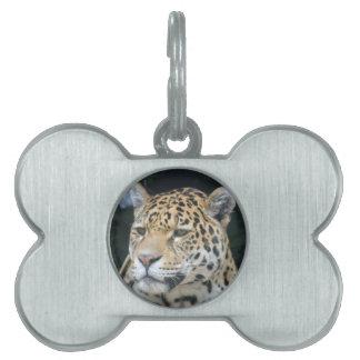 Jaguar Glare Pet Name Tag