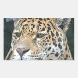 Jaguar Glare Sticker
