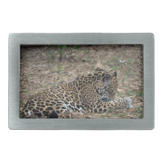 jaguar grooming leg big cat picture rectangular belt buckle