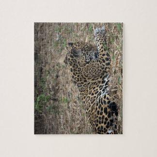 jaguar grooming leg big cat picture jigsaw puzzle