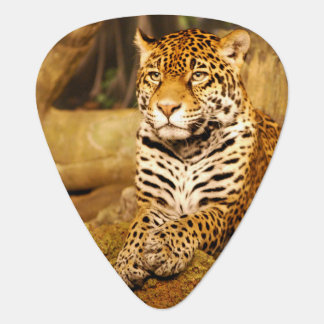Jaguar Guitar Pick