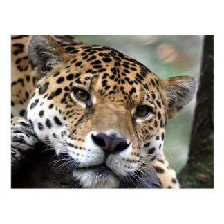 Jaguar hermoso del Amazonas Postal