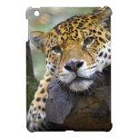 Jaguar hermoso que se relaja en árbol