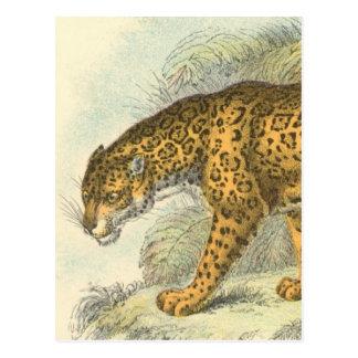 Jaguar Illustration Postcard