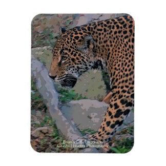 Jaguar Imanes Rectangulares