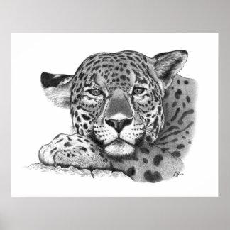 Jaguar in Pencil Poster