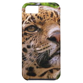 Jaguar Inquisitive iPhone SE/5/5s Case