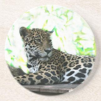 Jaguar looking over shoulder dappled green drink coaster