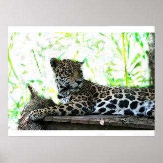 Jaguar looking over shoulder dappled green poster
